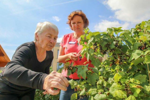 Ein paar erfrischenede Beeren tun bei dieser Hitze gut - so wie hier im Garten des Seniorenheims Haus Maria in Geseke. Foto: SMMP/Ulrich Bock