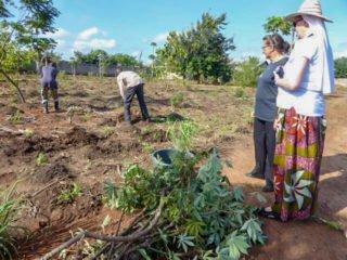 Schwester Maria Thoma lässt sich von Schwester Fátima den Maniok-Anbau erklären. Foto: Sr. Theresia Lehmeier/SMMP